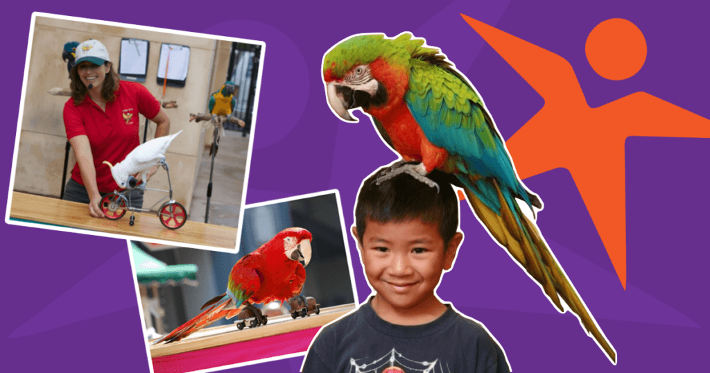 Summer Camp Bird Show